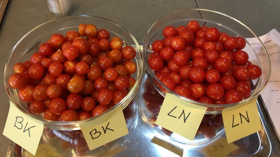cherrytomater Foto: nofima