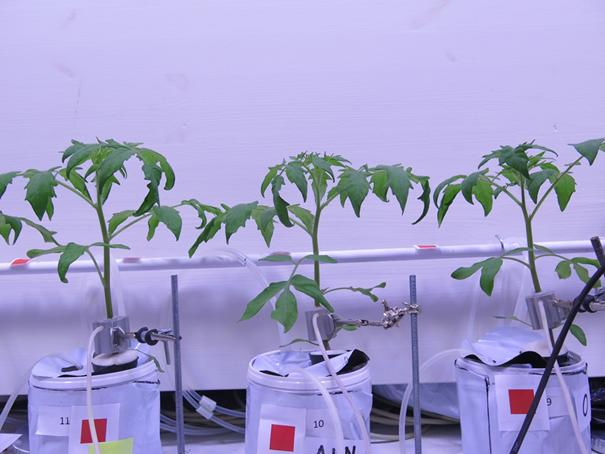 www.biofresh.no Måling av plantevekst